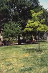 Giardino di San Piero a Ponti