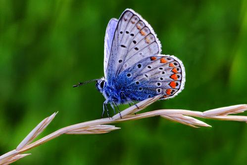 "MEDAGLIA D'ORO 2014 - ""Madama Butterfly"""